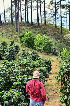 man standing in a coffee flour farm